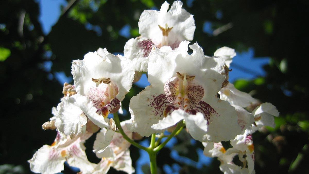 Baumplantagen-Anbau-Pistoia