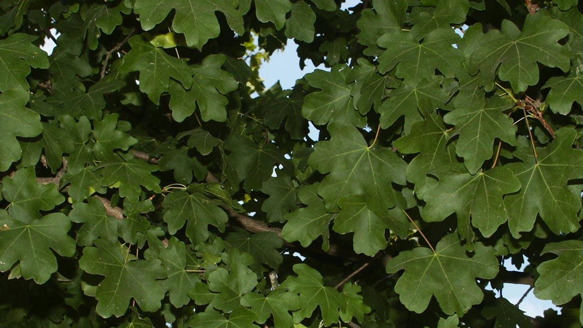 Baumplantagen-der-besten-Varietäten-und-Gröβen