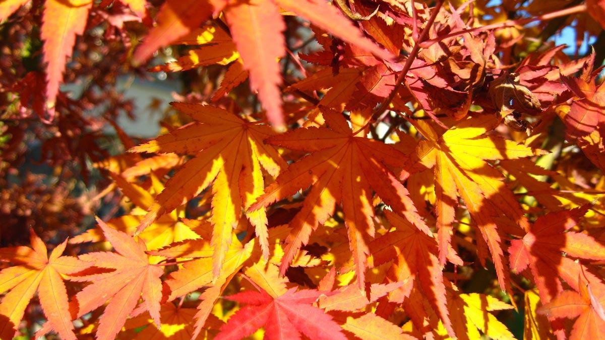 selektierte- Baumplantagen