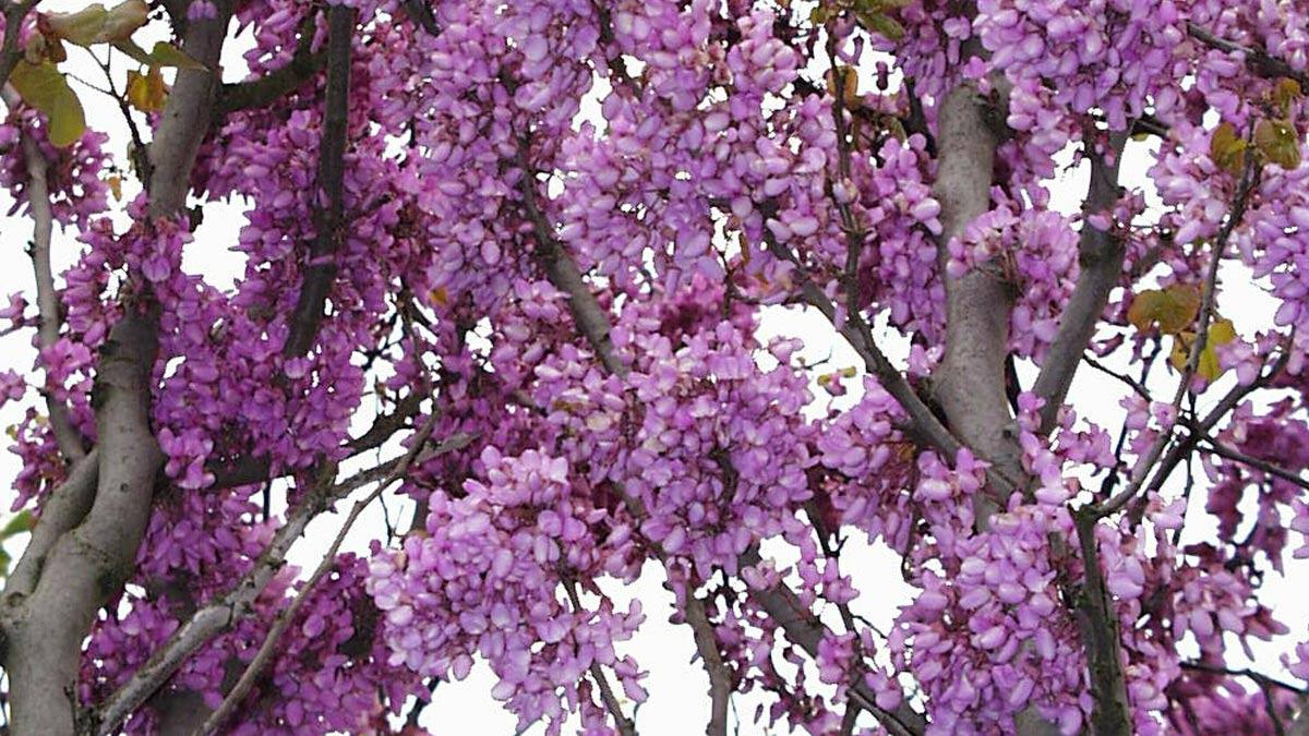 alberi-selezionati-in-zolla