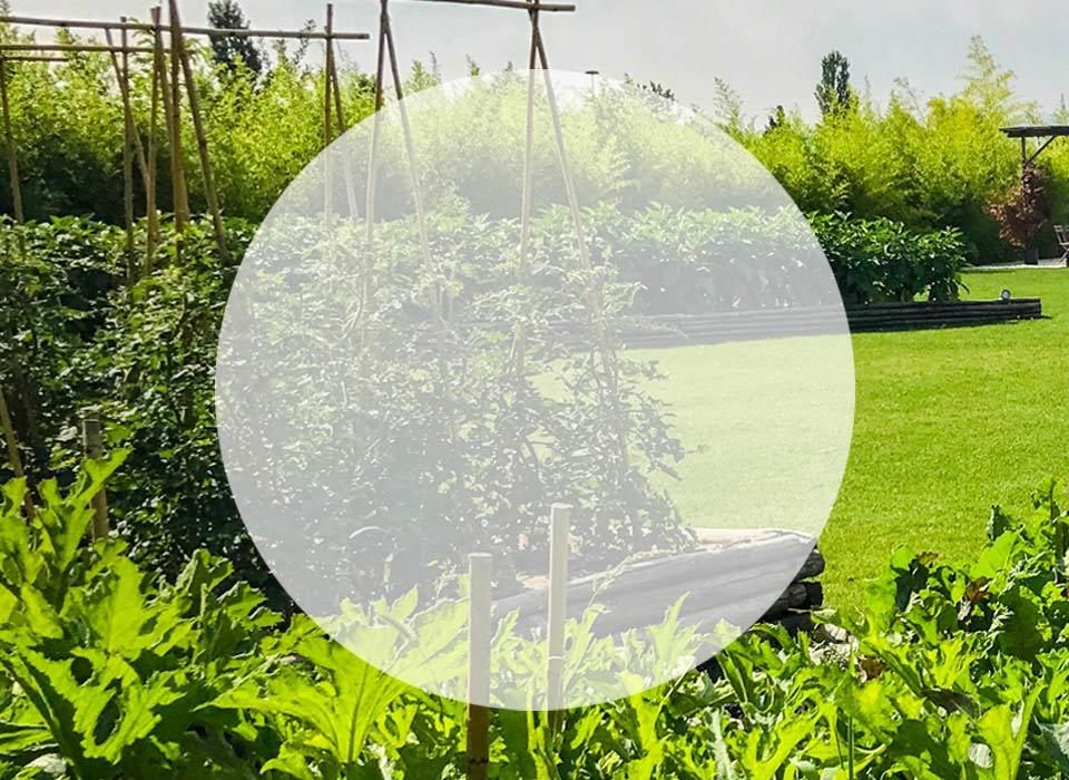 Ziergemüsegärten-und-im-Kasten-Realisierung-Gestaltung