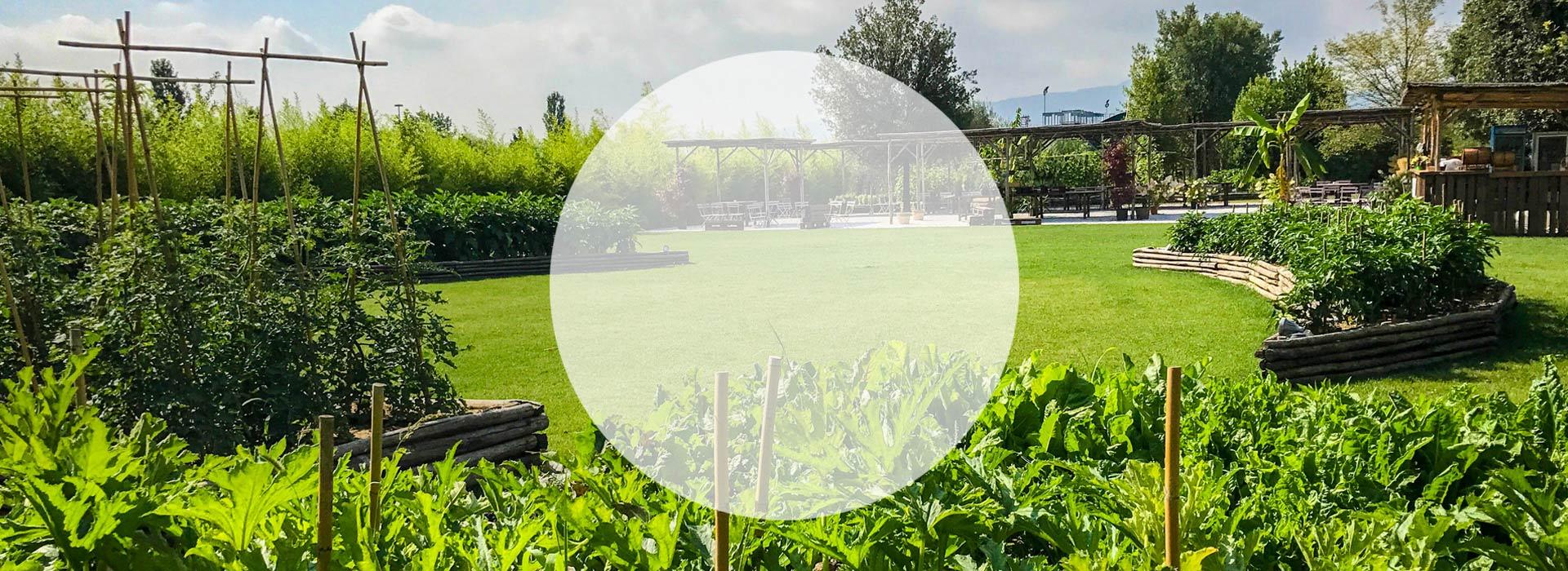 огороды-декоративные-растения-в-ящиках-реализация-проектирование