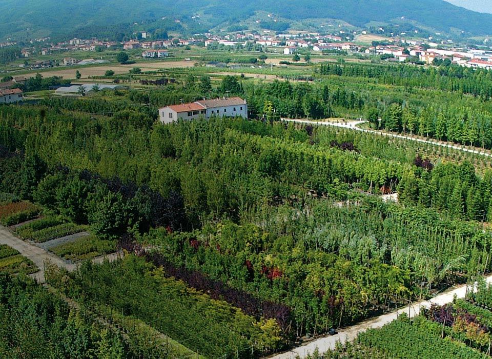 ornamental-plants-tree-plantations-climbing-plants-fruit-plants
