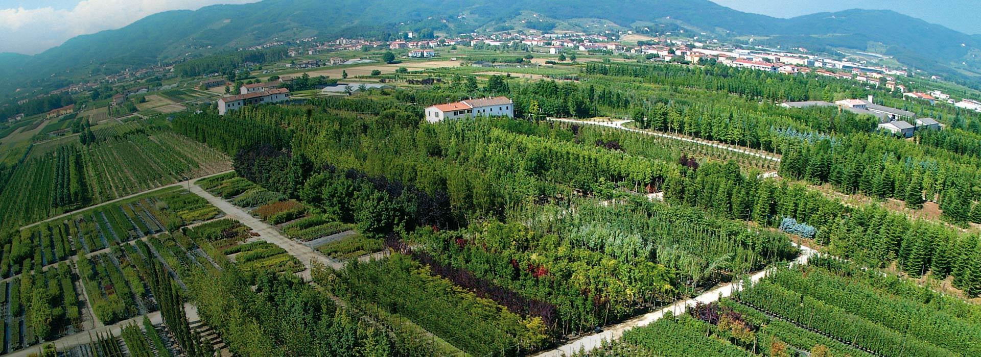 piante-ornamentali-alberature-rampicanti-piante-da-frutto