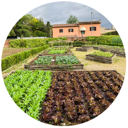 Mati-Experience-Besichtigung-Gemüsegärten-Gärten
