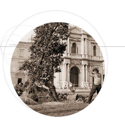 Nursery-Pistoia-Plants-Mati-
