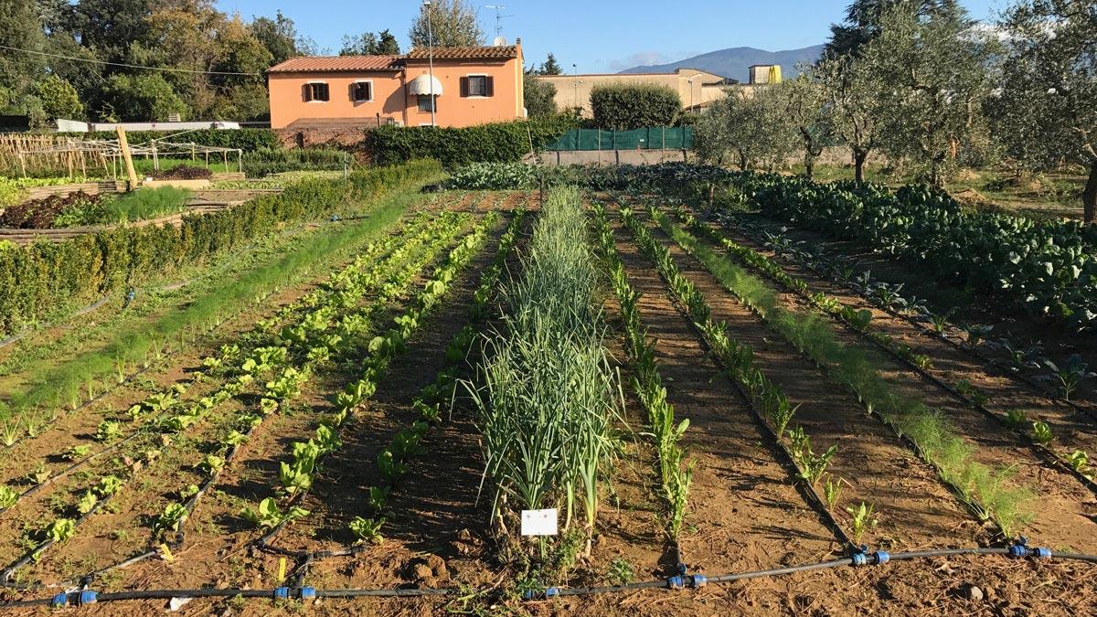 съедобные-сады-проектирование
