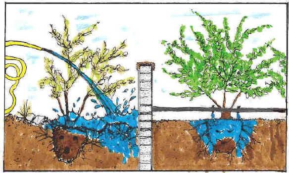 irrigazione-goccia-automatizzata