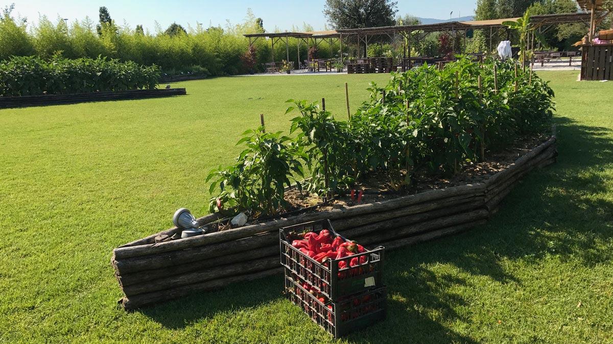 orticoltura-progetti-Toscana
