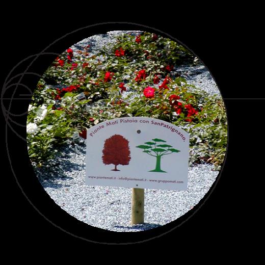 Plantes-Mati-engagement-social