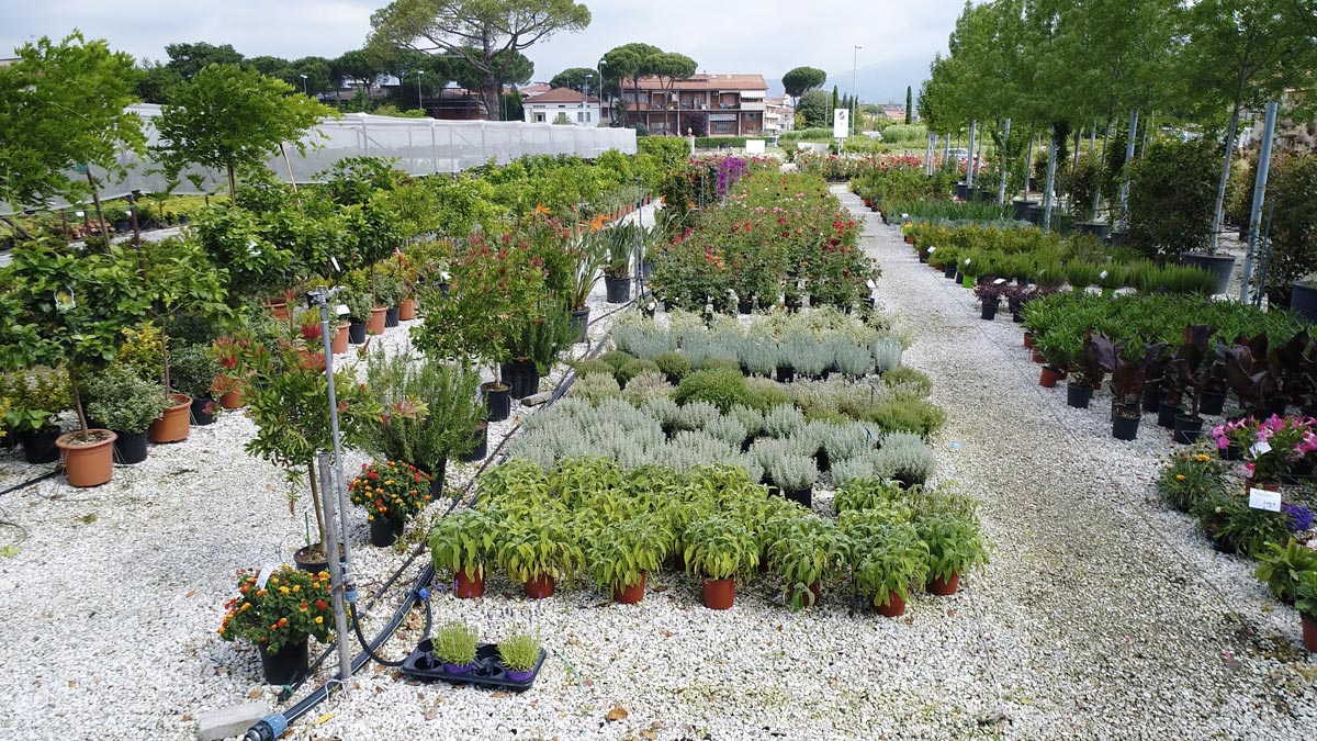 vivaio-vendita-al-pubblico-piante