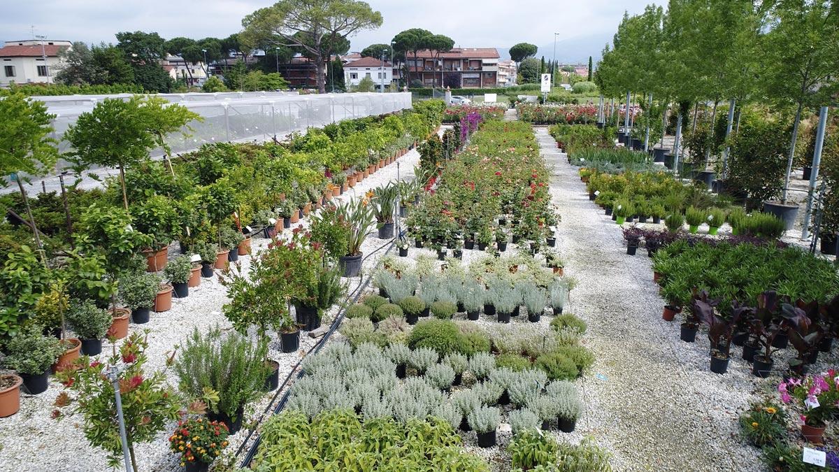 vivaio-vendita-piante-Mati-1909-Pistoia