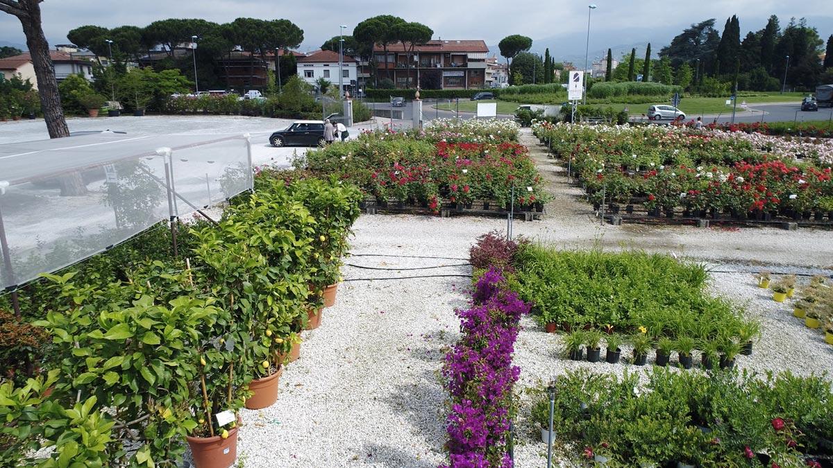 vivaio-vendita-piante-giardino-terrazzo-Pistoia