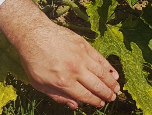 insetti-utili