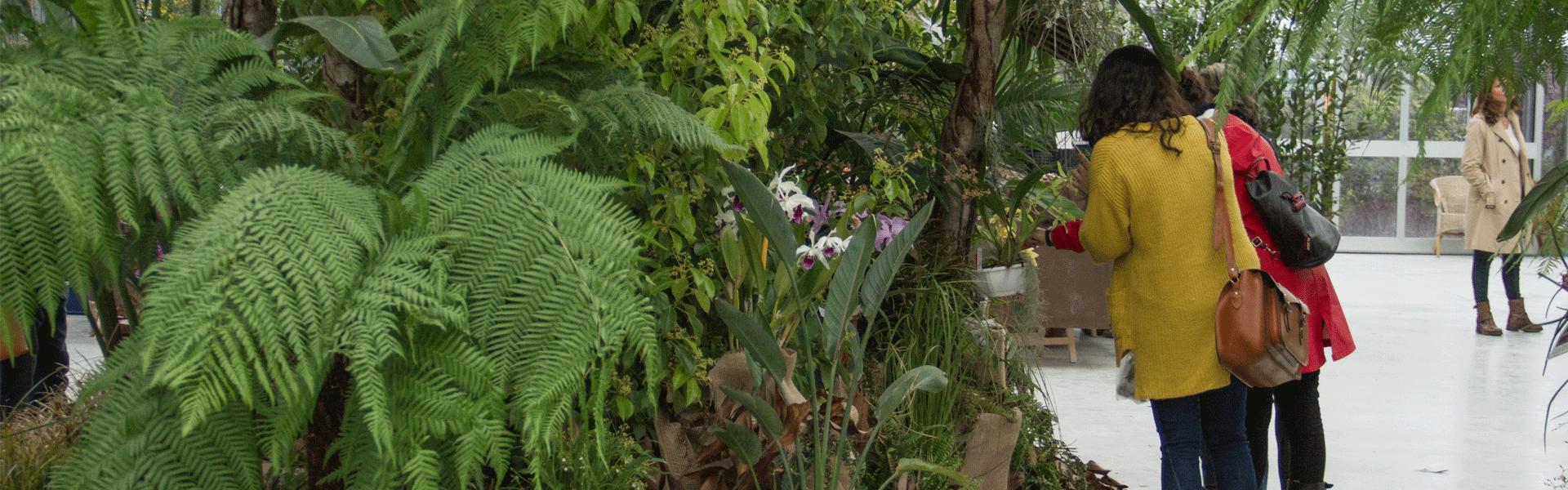 ORCHidea-mostra