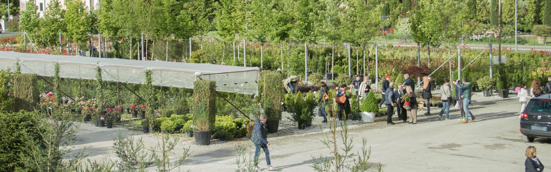ORCHidea-piazzale