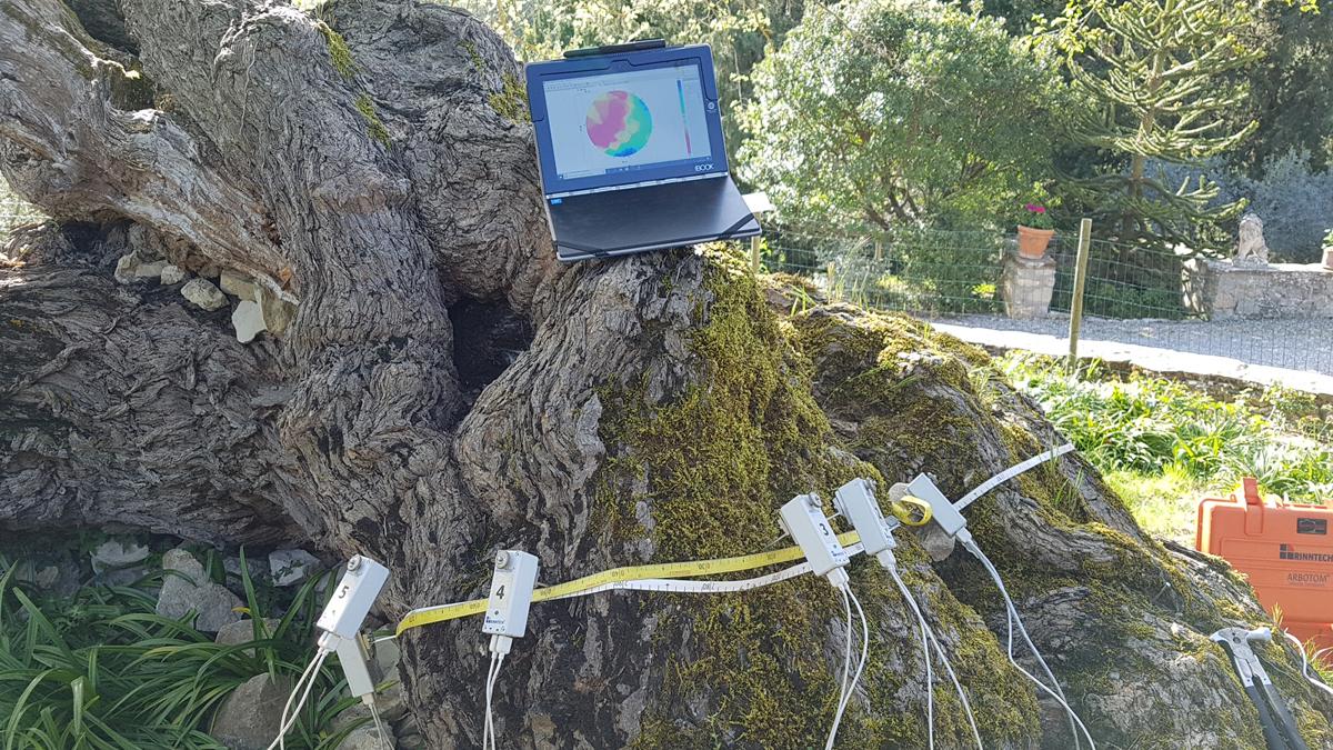 albero-monumentale