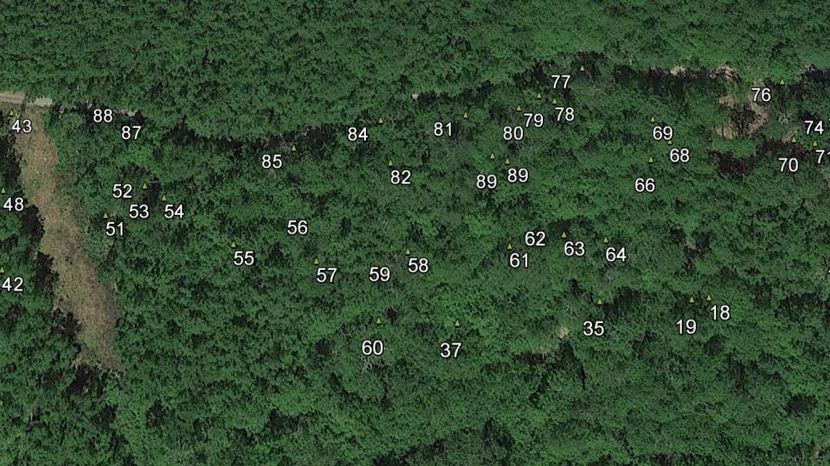 mappatura-alberi