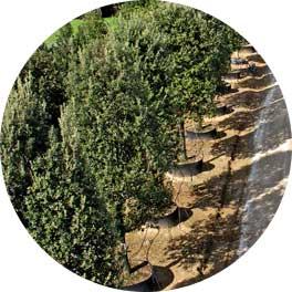 piante-grandi-vendita-Toscana