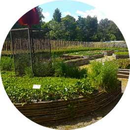 realizzazione-coltivazione-orti-Toscana