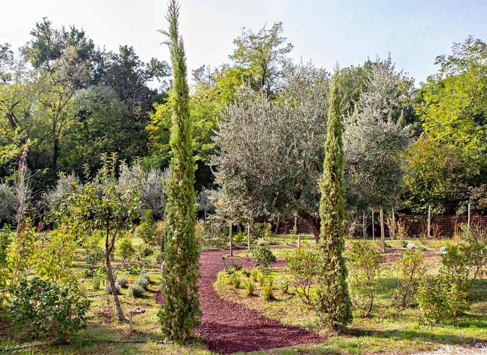 la-rosa-di-gerico-il-giardino-2