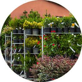progettazione-coltivazione-manutenzione-piante