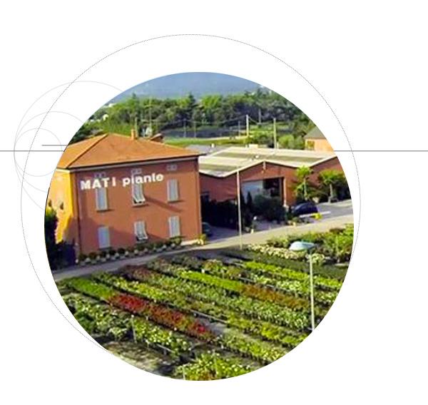 vivaio-piante-ornamentali-realizzazione-giardini-Mati-Pistoia