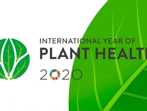 FAO-anno-internazionale-delle-piante
