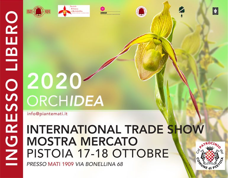 orchidea-2020