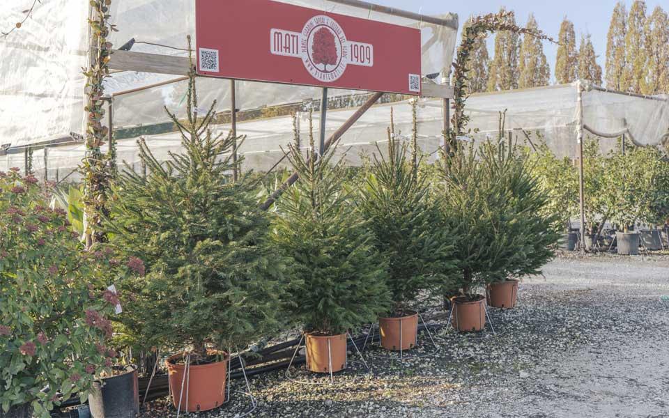 Natale-2020-alberi