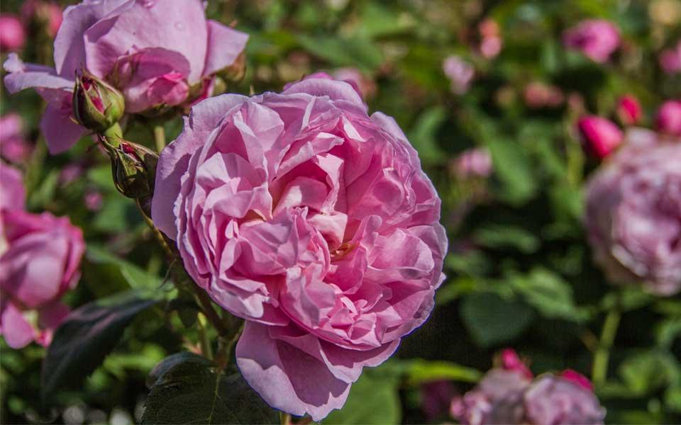 Mary-Rose