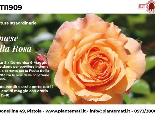 collezione-rose-2021